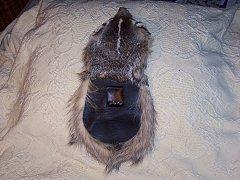 Click image for larger version.  Name:badger back.jpg Views:12 Size:177.7 KB ID:38504