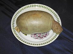 Click image for larger version.  Name:1_The_haggis_Jan29.jpg Views:2 Size:98.6 KB ID:32845