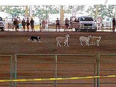 Click image for larger version.  Name:sheepdog1.jpg Views:6 Size:83.6 KB ID:37347
