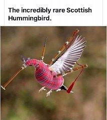 Click image for larger version.  Name:scottish hummingbird.jpg Views:8 Size:31.6 KB ID:38765